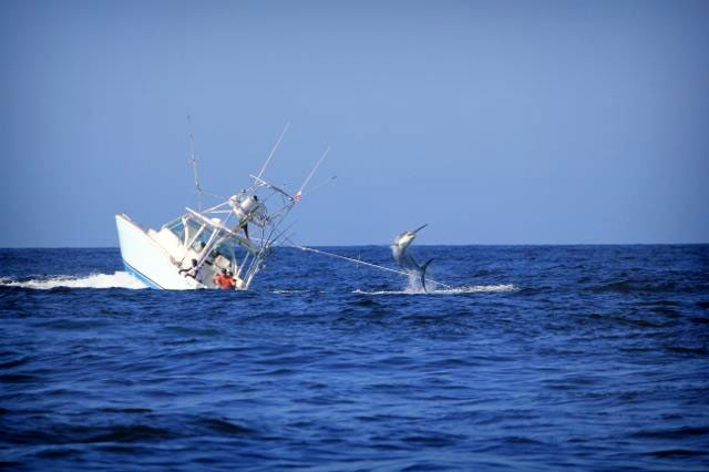 El pez espada que hundió un barco