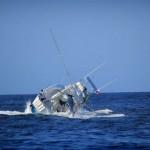 Pez espada hunde barco 6