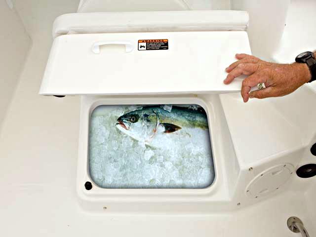 Lleva tu pesca fresca a casa n utica y deportes tenerife for Vivero para peces