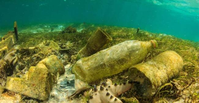 Microplásticos: contaminación que amenaza la pesca canaria
