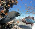 Animales curiosos de los fondos marinos