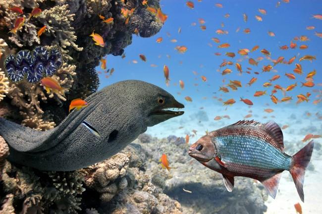 (Español) Animales curiosos de los fondos marinos