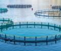 La acuicultura en Canarias