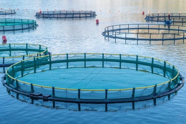 (Español) La acuicultura en Canarias