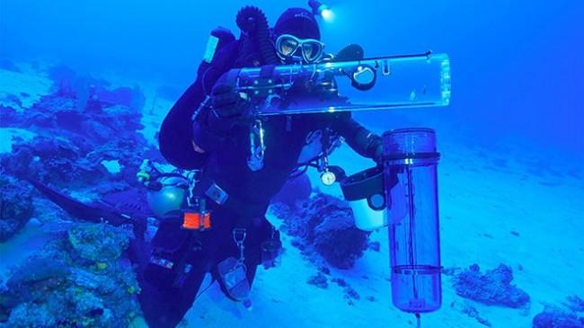 Capturar peces sin dañarlos ahora es posible