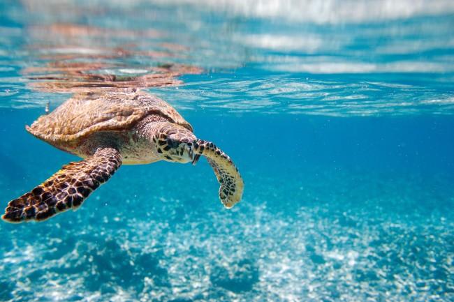 Especies marinas que puedes encontrar en Canarias