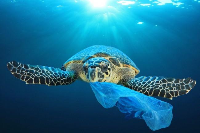 Microplásticos, un peligro patente en Canarias