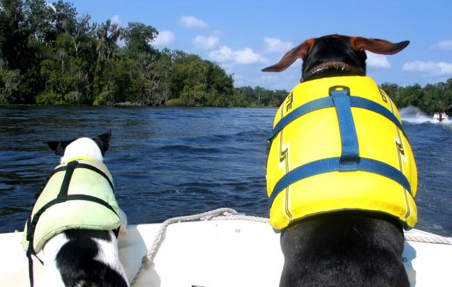 Viajar con mascotas: ¿Sabes cómo llevar mascotas a bordo?